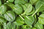 ビタミンb9(葉酸)ってどんな栄養素?【効果や効能もわかりやすく解説】