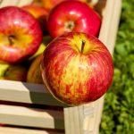 りんごの効能をわかりやすく簡単に解説【どんな効果が期待できる?】