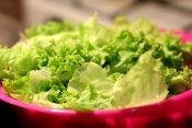 賞味期限切れのレタスを食べると危険?【レタスの賞味期限の注意点】