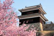 上田城ってどんな城?城主は誰?【上田城の歴史や、観光での見どころをわかりやすく解説】