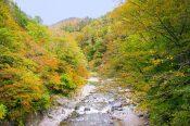 新潟県「月岡温泉」とは?【月岡温泉の歴史や周辺の観光スポットも紹介】