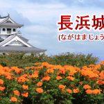 長浜城ってどんな城?城主は誰?【長浜城の歴史や、観光での見どころをわかりやすく解説】