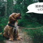班田収授法とは何か?【簡単にわかりやすく解説】