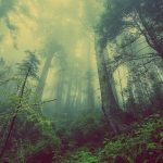 「森羅万象」の語源や由来は何?