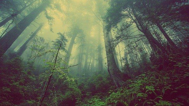 「森羅万象」の語源や由来