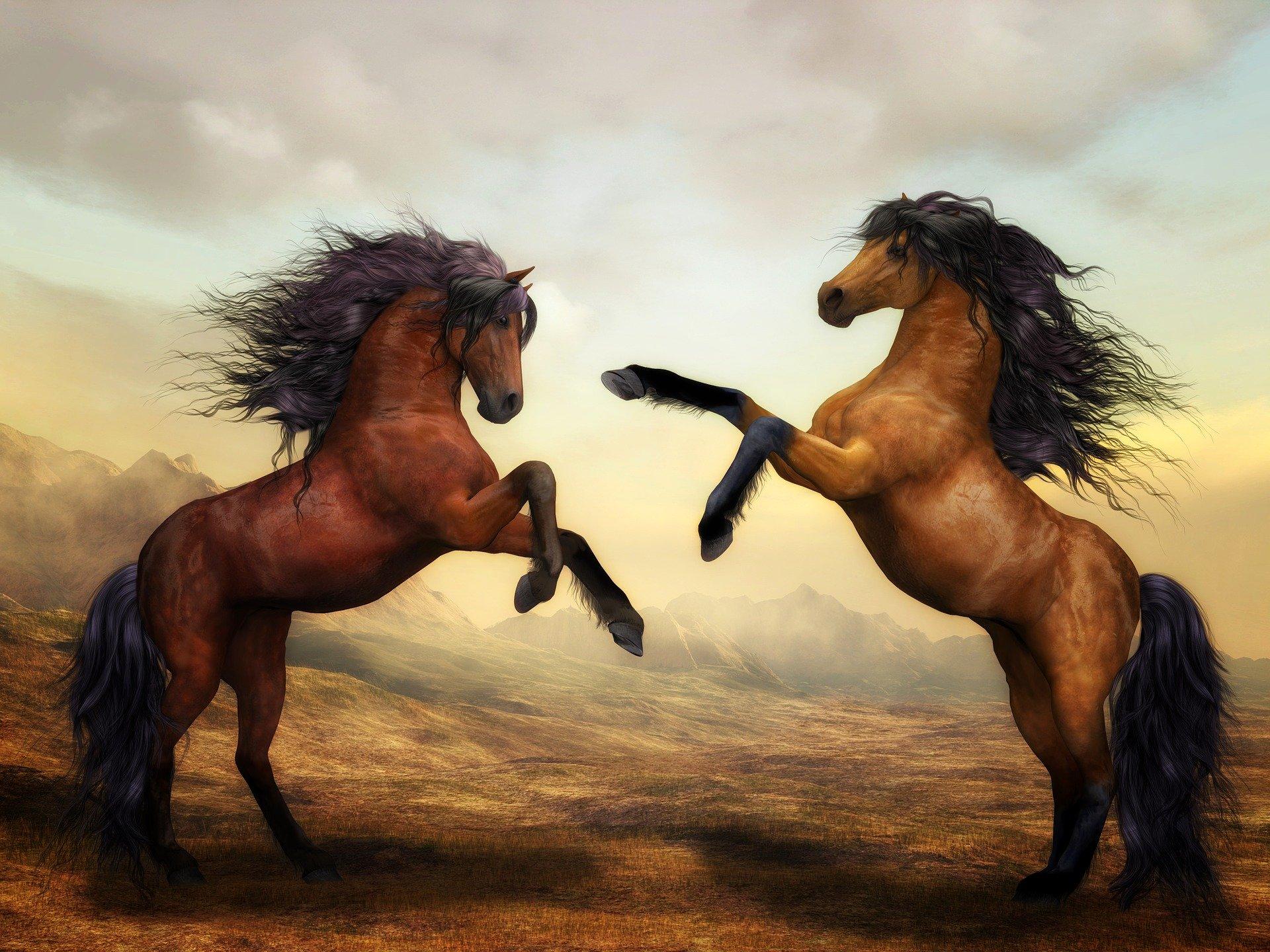 馬が合う馬が会っている様子