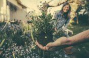 「根掘り葉掘り」の語源や由来