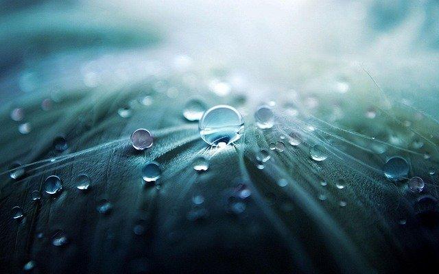 「如雨露(じょうろ)」の語源や由来